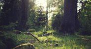 Camminata Spina Verde Como